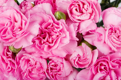 Birth flower for January is Carnation