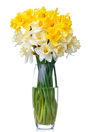 Birth flower for December is Narcissus