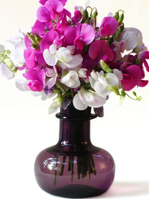 Birth flower for April is Sweet Pea